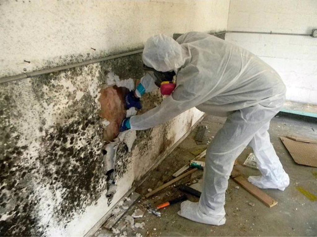 How to Remove Mold Services