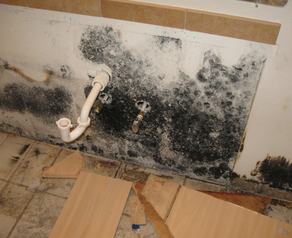 Kitchen Under Sink Mould Removal Services