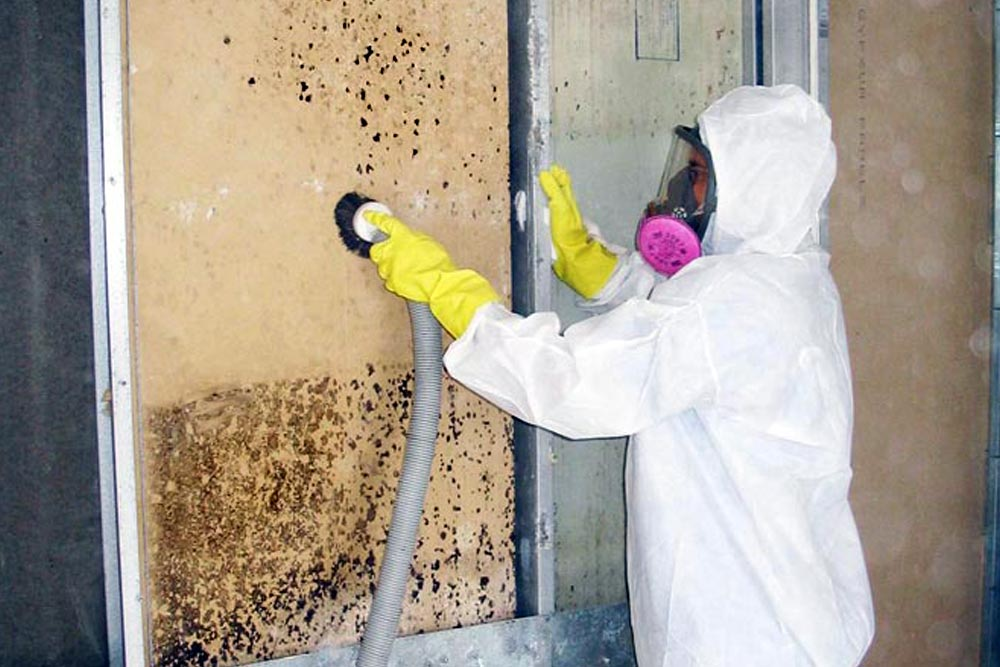Mold Remediation Services Toronto
