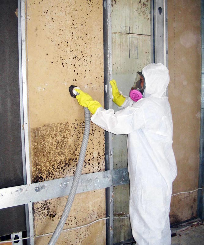 Mold Removal Services Toronto
