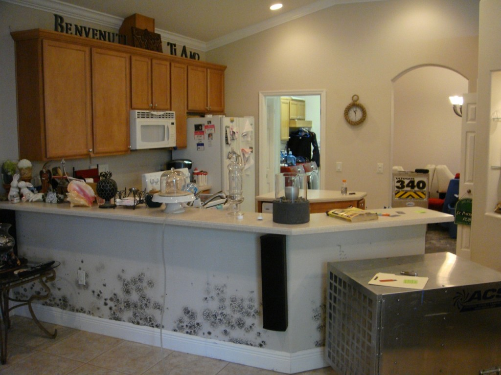 Residential Kitchen Mold Removal Services
